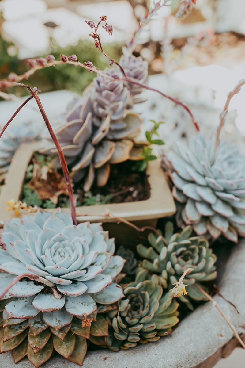 Elopement Photography, succulent centerpieces