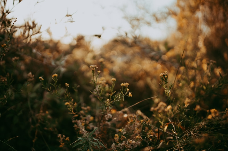 Travel Photography, small yellow flowers