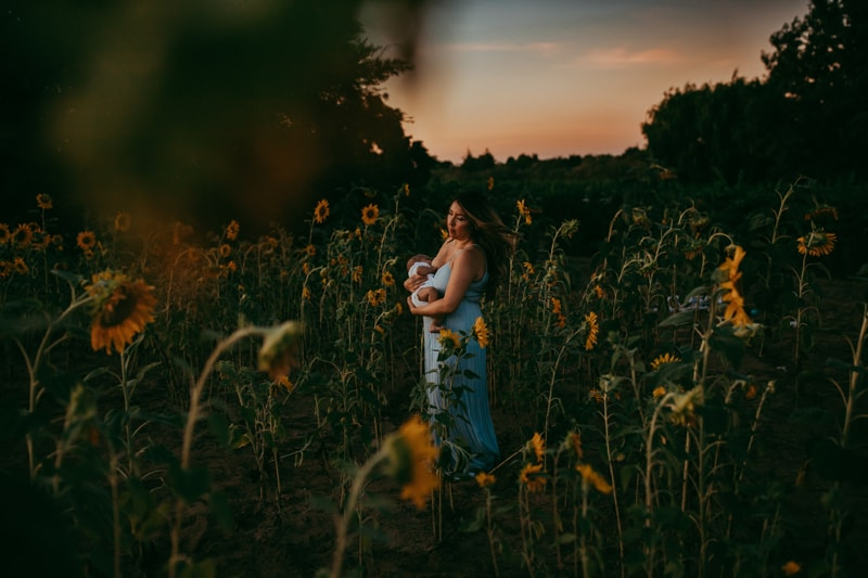 Motherhood Photography, wide angle of mother breastfeeding in sunflower field