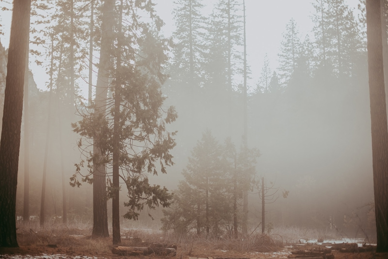 Travel Photography, foggy morning forest