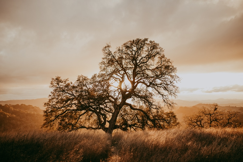Travel Photography, sunset behind a tree in field