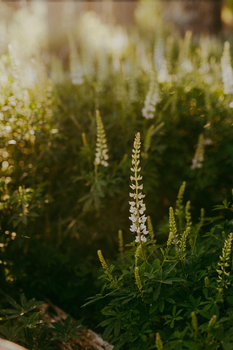 Travel Photography, flowering foliage